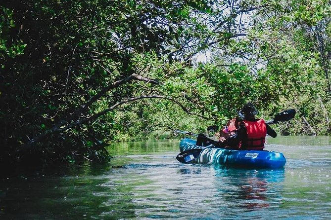 Mangrove Kayaking Adventure