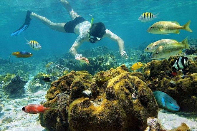 Pulau Payar Island Snorkeling and Diving Day Tour Including Lunch photo 2