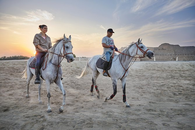 Arabian Sunset Horse Riding & Stable Tour