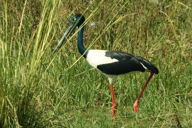 Day Trip to Bird Sanctuary Bharatpur from Agra