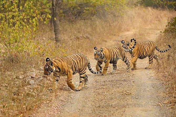 4-Day Ranthambore Tiger Safari Tour to Agra and Jaipur from Delhi photo 4