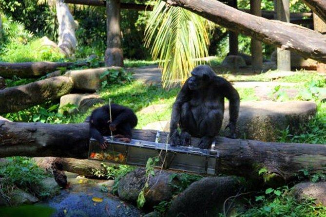 Private Tour: Singapore Nature Touch Tour