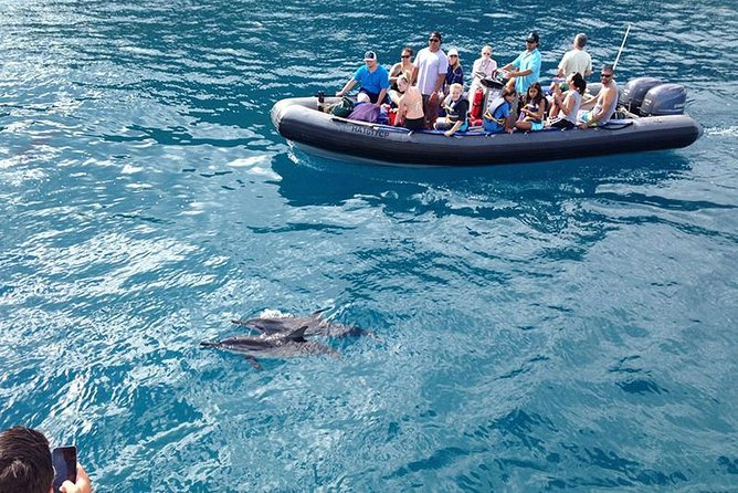 3 Hour Whale Watch Discovery Raft Tour