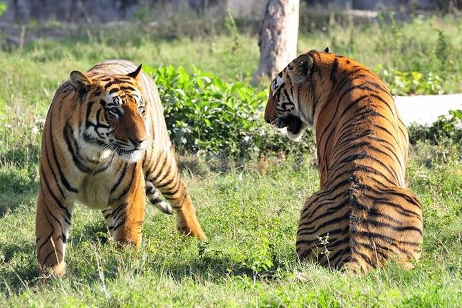2-Day Private Tour to Ranthambhore Tiger Safari Tour from Jaipur photo 1