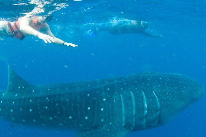 Whale Sharks tour in Cancun & Riviera Maya: Small-Group Eco Friendly photo 2