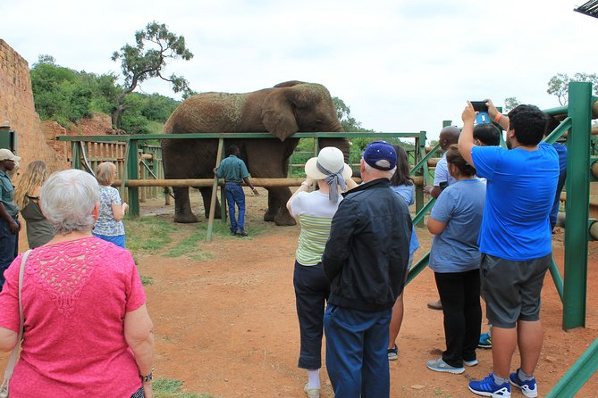 Feeding of Elephant (1)