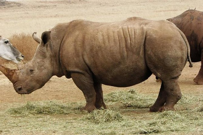 Rhino and Lion Safaris