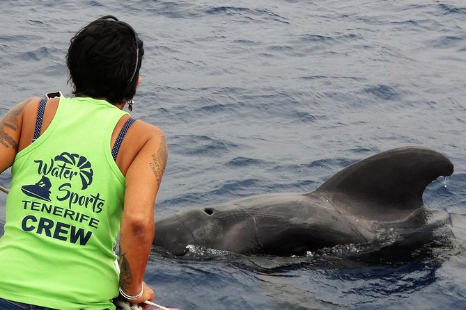 Collaborating with SEA SHEPHERD 2 hour Whale & Dolphin No Chase or Harrassment photo 1