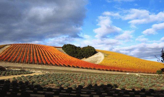 Heerlijk leuke educatieve wijntochten in Paso Robles