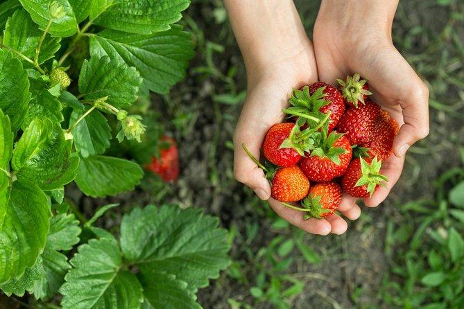 Strawberry Picking , Nami Island & Petite France