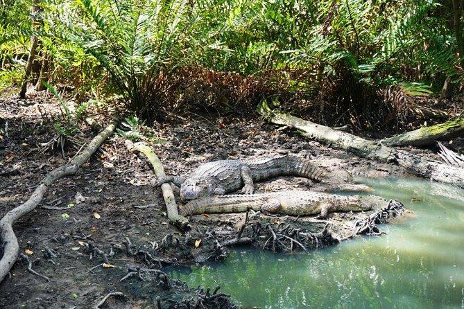 Rio Mangrove and Hiking Tour