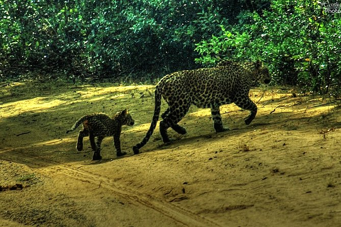 Private Day safari at Wilpattu National Park with Transfers