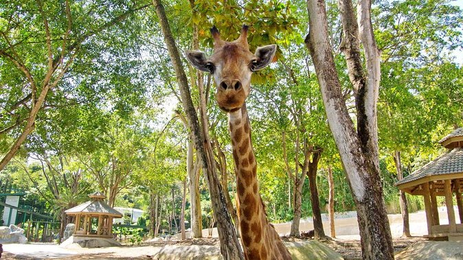 Chiang Mai Zoo Admission with Roundtrip Transfer