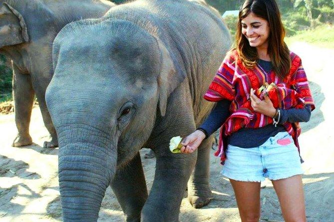 Elephant Jungle Sanctuary Tour from Chiang Mai