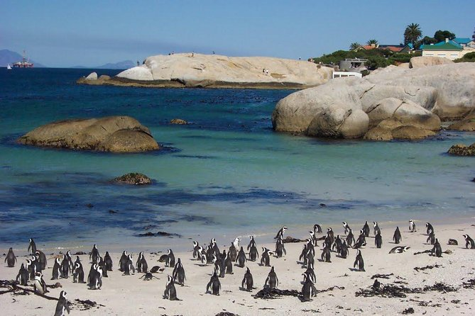 Cape Town , Private Tour: Table Mountain Cable Car & Cape Peninsula Penguins