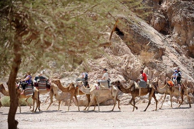 Half-day Camel Safari with Bedouin meal