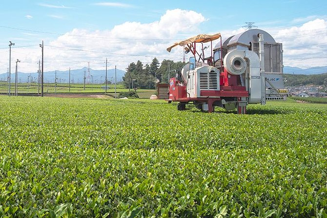 Private Tour - An adventure in The World of Tea, Iruma