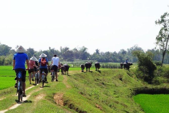Passeio de bicicleta ao redor de Hoi An (Particular)