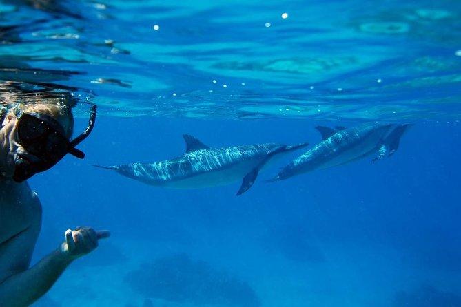 Dolphin Snorkel Tour