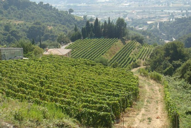 Provence Countryside Full-Day Private Tour from Nice