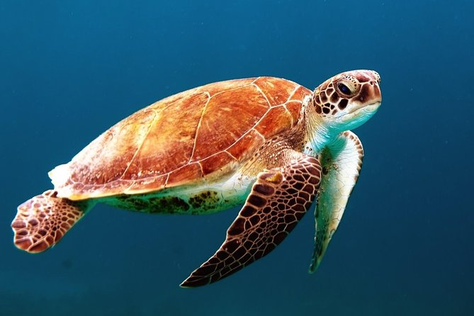 Private Tour: Sightseeing Cruise and Snorkeling in Los Cabos