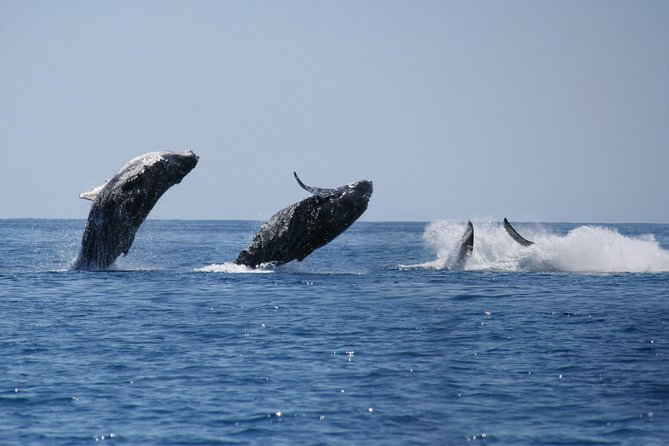 Private Whale Watching Tour in Los Cabos photo 4