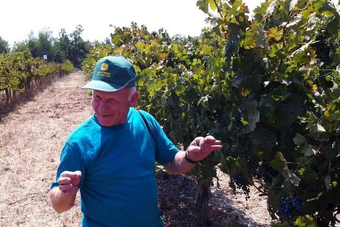 Private Wine Tour of Northern Israel
