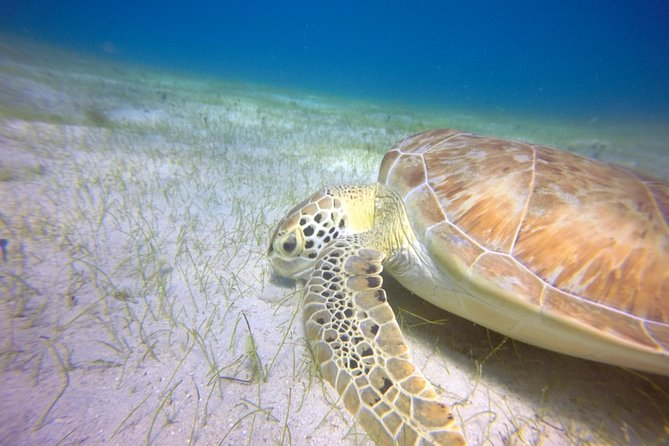 Private Full Day Snorkeling trip for Cruise Ship Guests