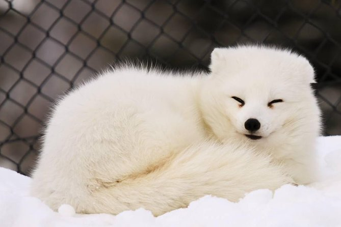 Asahiyama Zoo and Snow Crystal Museum Day Tour