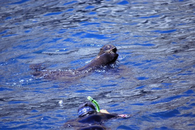 Seal Swimming Tour from Kaikoura