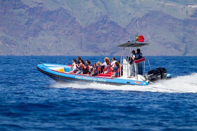 Observação De Golfinhos, Baleias, Tartarugas E Pássaros