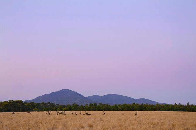 Sunset Koalas and Kangaroos Tour in the Wild from Melbourne
