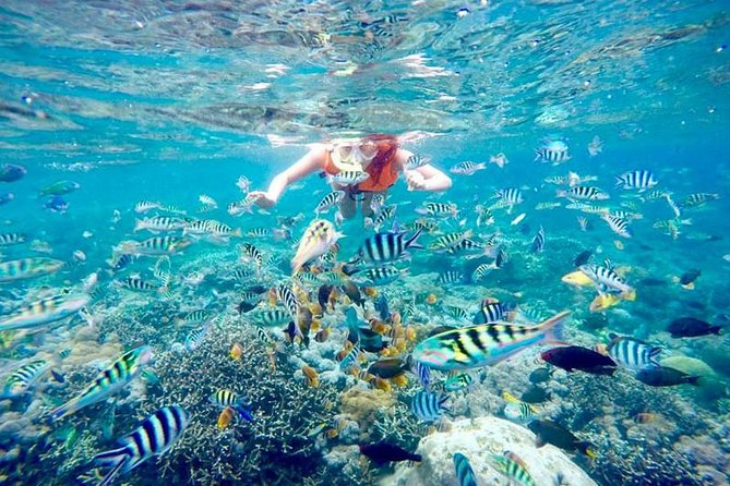 The Best Package of One-day Lembongan Adventure-1-spot Snorkeling-Mangrove Tour