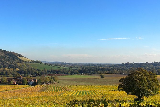 English Wine Day Tour from London