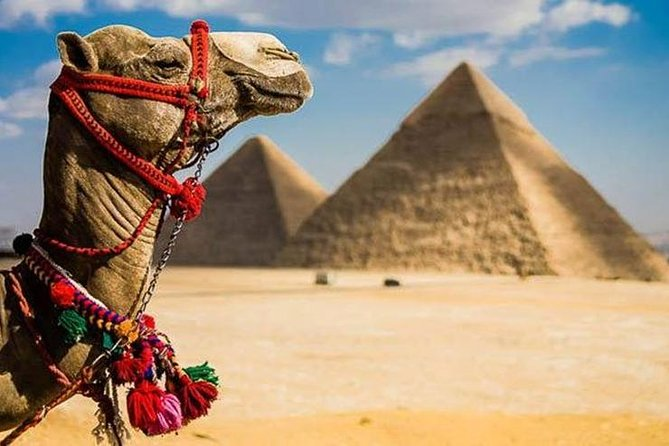 Half Day Tour (Pyramids,Museum and Bazaar including Camel Ride and Lunch)