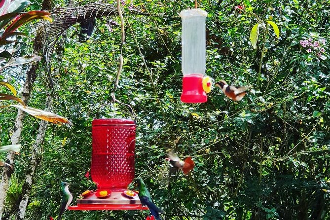 EXCURSION MIDDLE OF THE WORLD & HUMMINGBIRDS ALAMBI