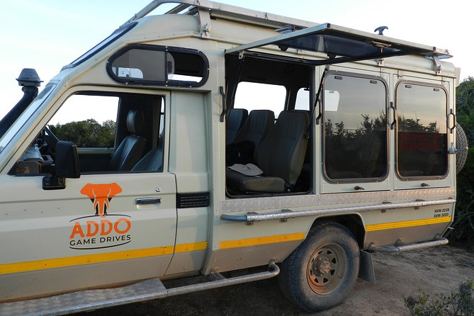 Addo Elephant Full Day Safari with a Traditional South African Braai (BBQ) Lunch
