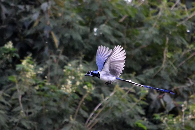 Private Tour: Bird Watching and Hiking in the Sierra Madre Mountains from Mazatlan