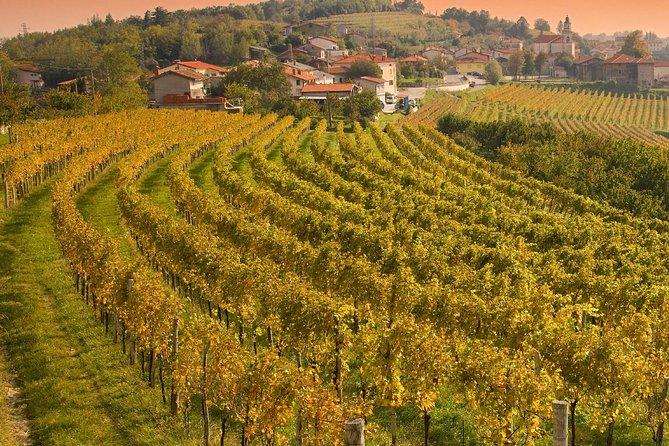 Wine Tasting Private Day Trip to Goriska Brda