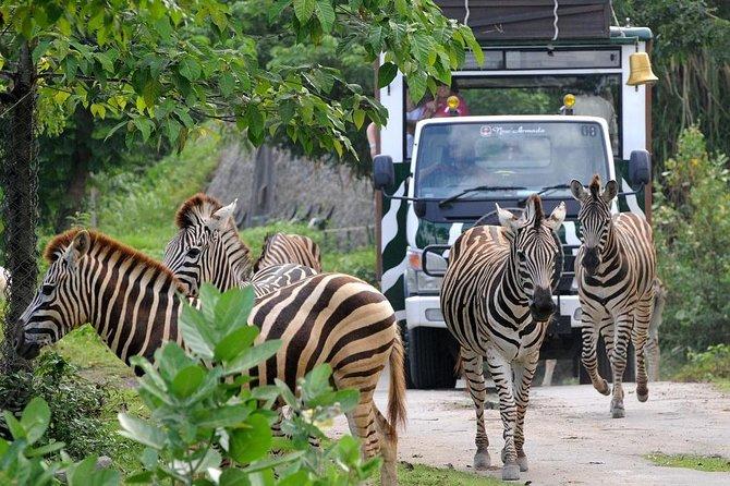 Bali Safari Marine Park And Jimbaran Dinner Day Tour