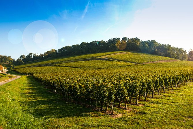 Bordeaux Organic & Biodynamic Wine Experience Private Tour photo 1