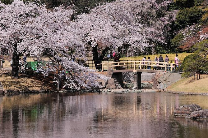 Private Custom Cherry Blossoms Tour by Chartered Vehicle