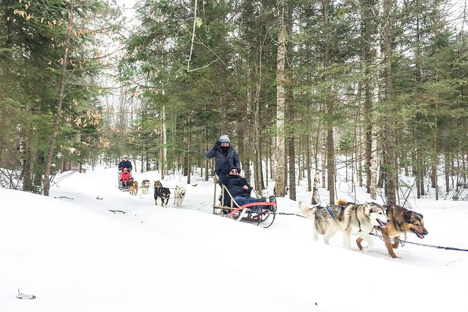 Dog Sledding Adventure from Toronto Private Tour