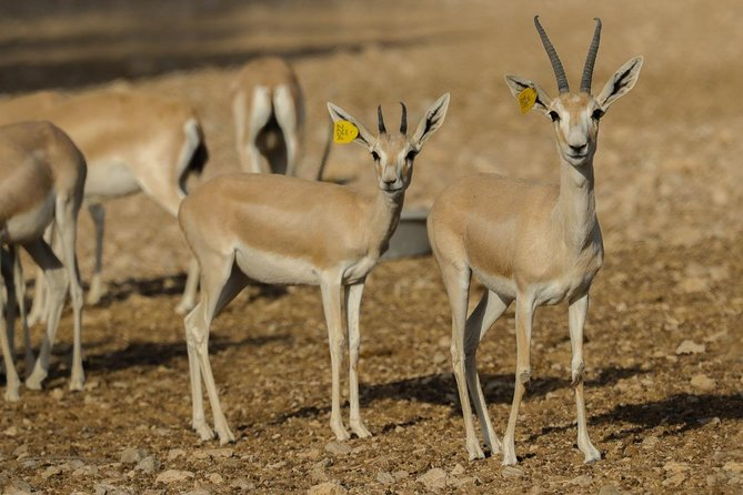 Skip the Line: Al Ain Zoo & Entry Ticket to Al Ain Wildlife Park & Resort