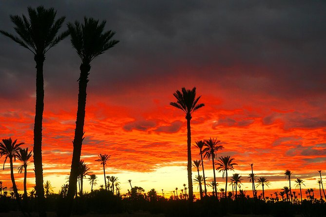 Private Sunset Camel Ride With Tea Break In Marrakeh Palm Grove