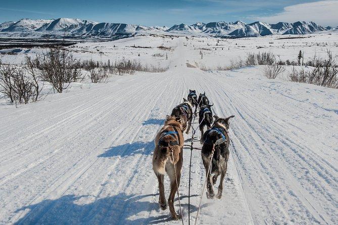 Dog Sledding - Subarctic Wilderness Tour