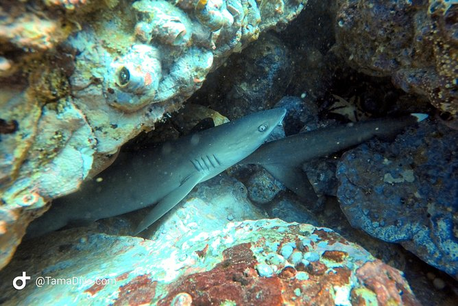 FunDive Catalina Islands (2 dives only for Certified divers)