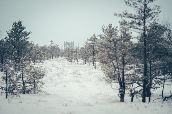 Ķemeri National Park. Winter.