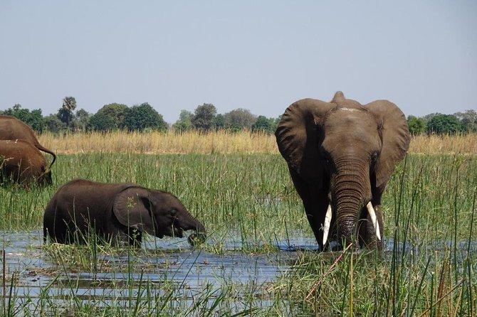 Chobe Day Trip Botswana