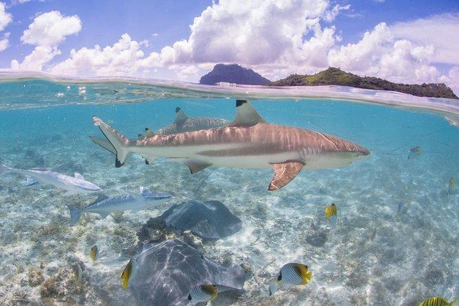 Bora Bora Eco Snorkel Cruise Including Snorkeling with Sharks and Stingrays